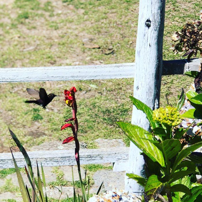 Hummingbird Lazy Dog Inn